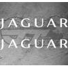 Stickers Jaguar